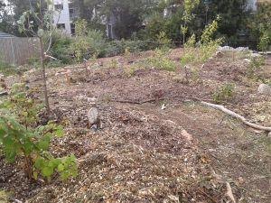 forest garden 3