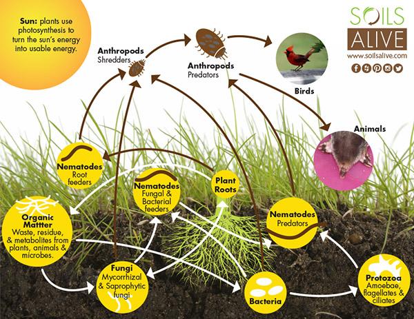 Soil Web 600px